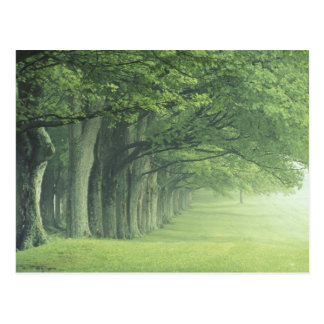 USA, Kentucky. Row of trees in spring Postcard