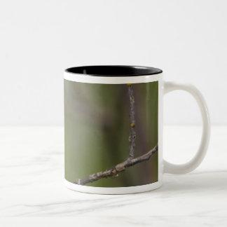 USA, Lake Sammamish, Washington. Cedar Waxwing Two-Tone Coffee Mug