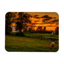 USA, Lexington, Kentucky. Lone horse at sunset 1 Magnet