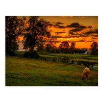 USA, Lexington, Kentucky. Lone horse at sunset 1 Postcard