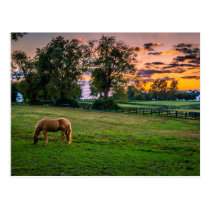 USA, Lexington, Kentucky. Lone horse at sunset 2 Postcard