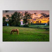 USA, Lexington, Kentucky. Lone horse at sunset 2 Poster
