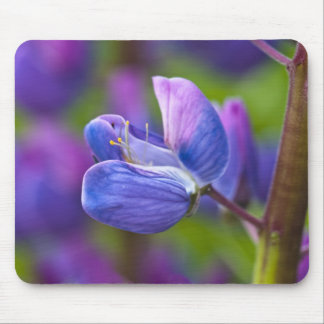 USA, Maine, Acadia National Park. Close-up of Mouse Pad