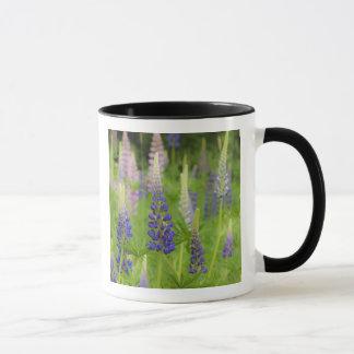 USA, Maine, Acadia National Park. Field of Mug