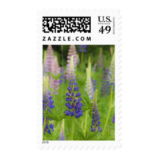 USA, Maine, Acadia National Park. Field of Stamps