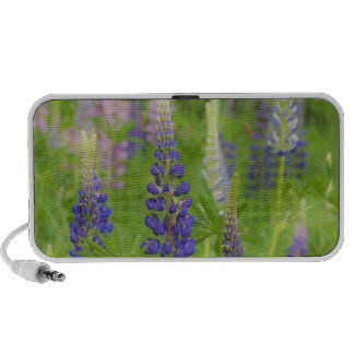 USA, Maine, Acadia National Park. Field of Portable Speakers
