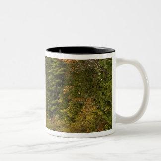USA; Maine; Acadia NP. Fall reflections at 2 Coffee Mug