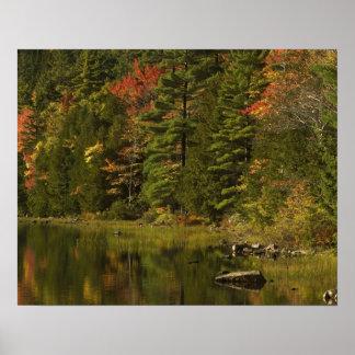 USA; Maine; Acadia NP. Fall reflections at 2 Poster