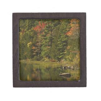 USA; Maine; Acadia NP. Fall reflections at 2 Premium Gift Box