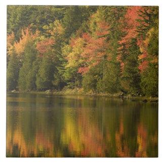 USA; Maine; Acadia NP. Fall reflections at Ceramic Tiles