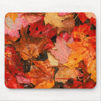 USA, Maine. Autumn maple leaves Mouse Pad