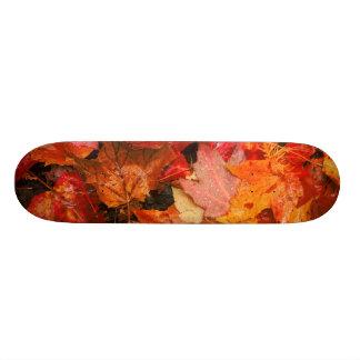 USA, Maine. Autumn maple leaves Skateboard
