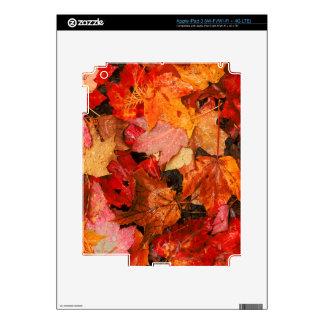 USA, Maine. Autumn maple leaves Skins For iPad 3