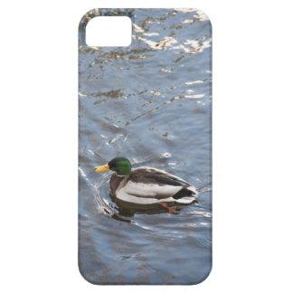 USA, Maine, Camden, Mallard Duck on lake iPhone SE/5/5s Case