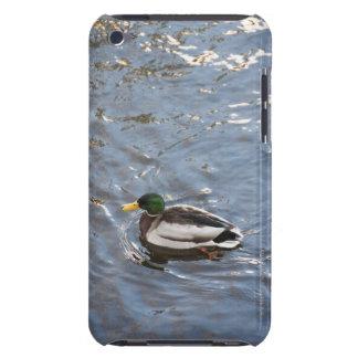 USA, Maine, Camden, Mallard Duck on lake iPod Case-Mate Cases
