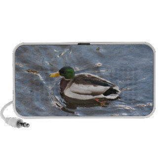 USA, Maine, Camden, Mallard Duck on lake PC Speakers