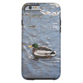 USA, Maine, Camden, Mallard Duck on lake Tough iPhone 6 Case