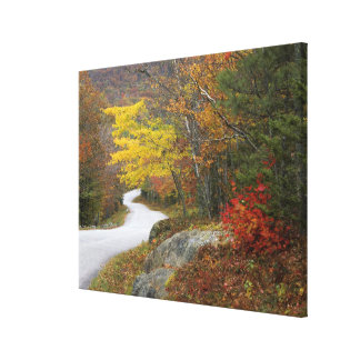 USA, Maine, Camden. Road leading through Camden Canvas Print