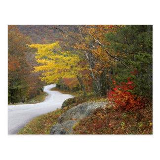 USA, Maine, Camden. Road leading through Camden Postcard