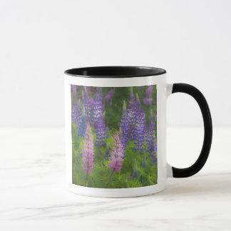 USA, Maine, Southwest Harbor. Blooming lupine Mug