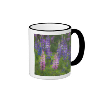 USA, Maine, Southwest Harbor. Blooming lupine Ringer Coffee Mug