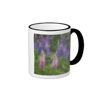 USA, Maine, Southwest Harbor. Blooming lupine Ringer Mug