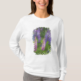 USA, Maine, Southwest Harbor. Blooming lupine T-Shirt