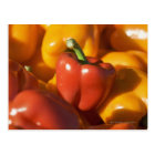 USA, Massachusetts, Boston, bell peppers Postcard