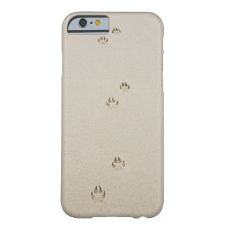 USA, Massachusetts, dog's track on sand Barely There iPhone 6 Case