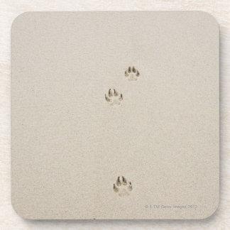 USA, Massachusetts, dog's track on sand Coaster