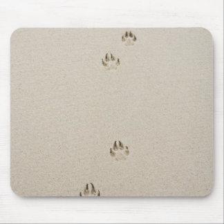 USA, Massachusetts, dog's track on sand Mouse Pad