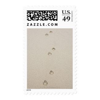 USA, Massachusetts, dog's track on sand Stamp
