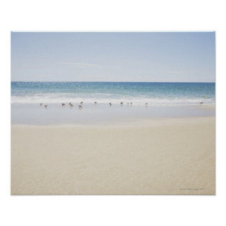 USA Massachusetts Empty beach 3 Print