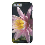USA, Massachusetts, Great Barrington, lily pad Barely There iPhone 6 Case