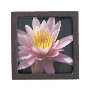 USA, Massachusetts, Great Barrington, lily pad Jewelry Box
