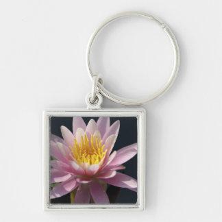 USA, Massachusetts, Great Barrington, lily pad Key Chains
