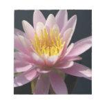 USA, Massachusetts, Great Barrington, lily pad Memo Note Pad