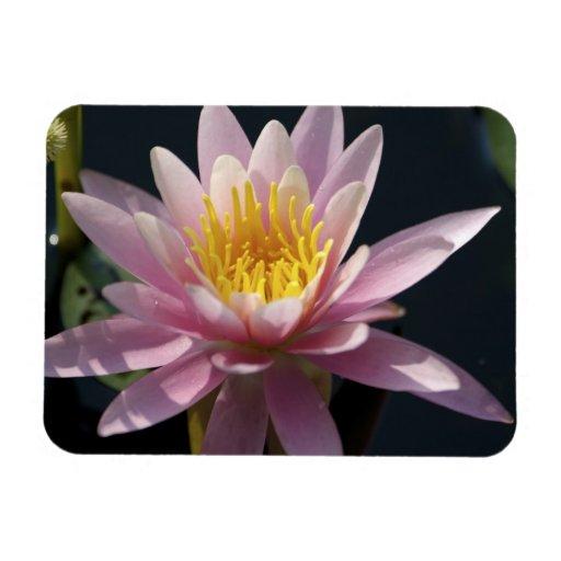 USA, Massachusetts, Great Barrington, lily pad Rectangle Magnet
