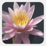USA, Massachusetts, Great Barrington, lily pad Square Sticker