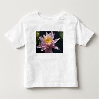 USA, Massachusetts, Great Barrington, lily pad T Shirt