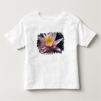 USA, Massachusetts, Great Barrington, lily pad Toddler T-shirt