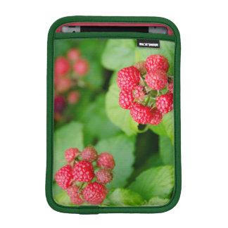 USA, Massachusetts, Nantucket. Ripe Raspberries Sleeve For iPad Mini
