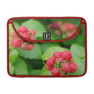 USA, Massachusetts, Nantucket. Ripe Raspberries Sleeve For MacBooks