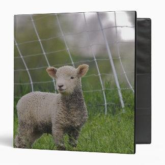 USA, Massachusetts, Shelburne. A lamb with 3 Ring Binder