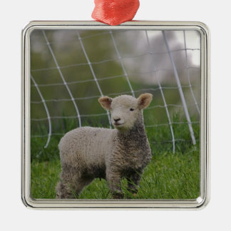 USA, Massachusetts, Shelburne. A lamb with Metal Ornament
