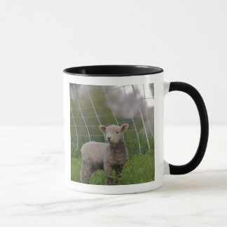 USA, Massachusetts, Shelburne. A lamb with Mug
