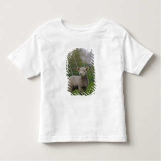 USA, Massachusetts, Shelburne. A lamb with Toddler T-shirt