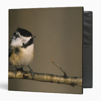USA, Michigan. Black-capped chickadee perched 3 Ring Binders