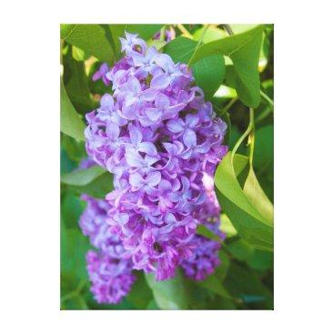 USA Themed USA, Michigan. Blooming French Lilac Canvas Print
