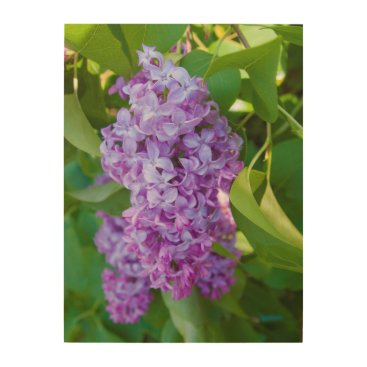 USA Themed USA, Michigan. Blooming French Lilac Wood Wall Art